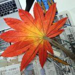 葉の根元にスッポリと収まるまで調整してください